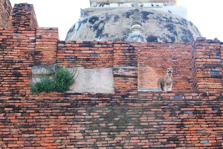 pagoda  famous wane in wat Phra Sri Sanphet Stock Photo