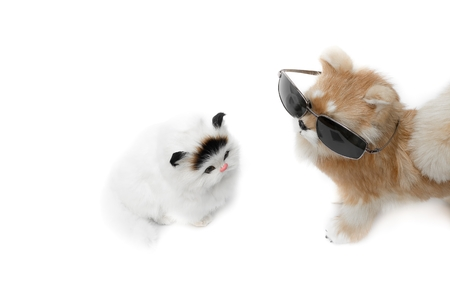 moggy: doll dog wearing sunglasses and cat cute beautiful on white background with copy space for add text Stock Photo