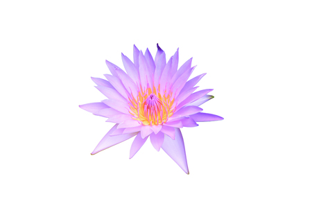 Lotus flower purple beautiful isolated on white background and clipping path