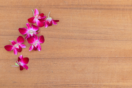 purple orchid beautiful on wooden floor board with copy space and text Фото со стока - 101961249