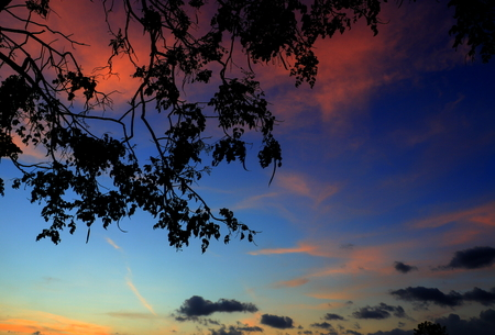 tree and branch silhouette  at sunset in sky beautiful landscape image  on nature : with copy space for add text.