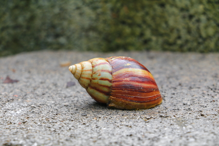 closeup snail on the concrete floor background