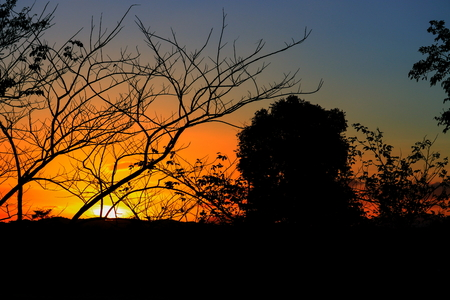 tree and branch silhouette at sunset yellow - orange in sky beautiful landscape on nature: with copy space for add text. Stock fotó