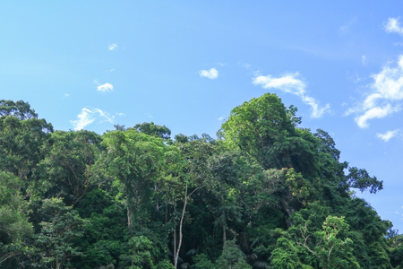 rain forest  tropic landscape under sunlight in the  summer with blue sky background 스톡 콘텐츠