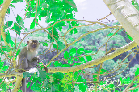 monkey sit on the tree lives in a natural forest with copy space add text