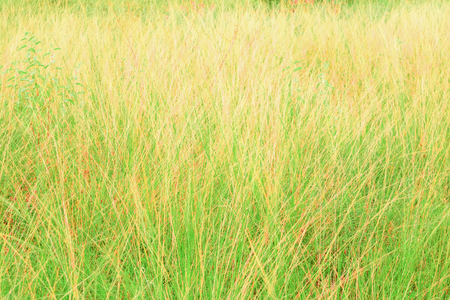 grass field leaf in summer nature landscape  beautiful with copy space add text