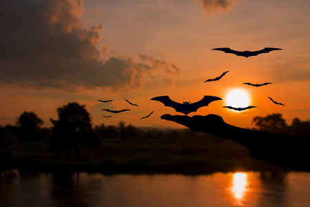hand devil liberate bat with silhouettes and water reflect Before sunset in Halloween day Concept background