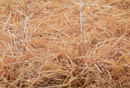 Dry Straw texture background with copy space add text Stock Photo