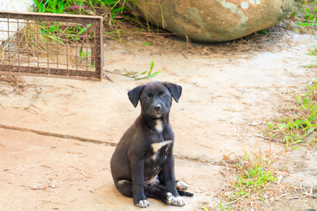 black puppy sit On the cement floor