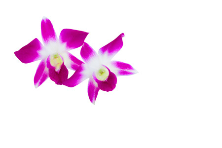 purple orchid flower bouquet beautiful isolated on white background and clipping path with copy space add text