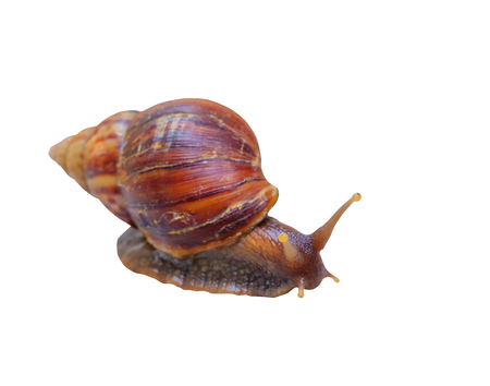 closeup snail isolated on white background and clipping path with copy space add text Imagens