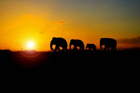 silhouette elephant family herd animals wildlife evacuate walking in twilight sunset beautiful background. with copy space add text