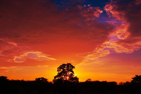 sunset beautiful in sky dark color and silhouette tree  landscape colorful twilight time