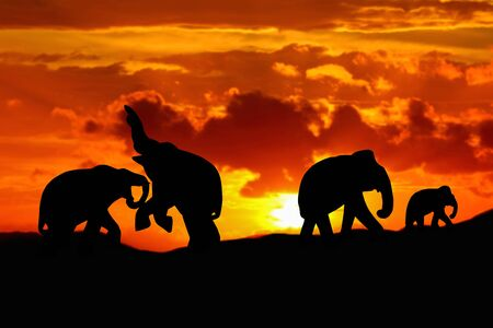 silhouette elephant battle and family herd animals wildlife evacuate walking in twilight sunset beautiful background. with copy space add text Stock Photo