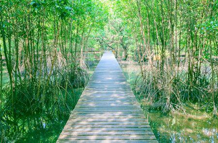 walkway wood bridge in natural mangrove forest environment at Chanthaburi travel Thailand