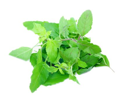 basil leaves herb pile on white background (Ocimum basilicum), vegetable Nourish the health body
