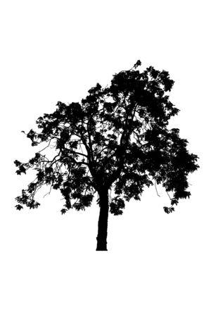 siluetas de árboles hermosos aislados sobre fondo blanco