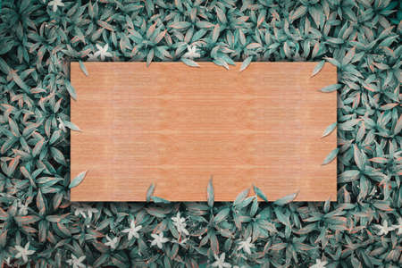 wooden sheet on green leaves nature background