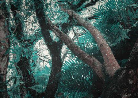 close up tree rainforest beautiful on white background