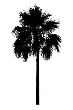 Palm tree silhouette Ornamental plants beautiful on white background Archivio Fotografico