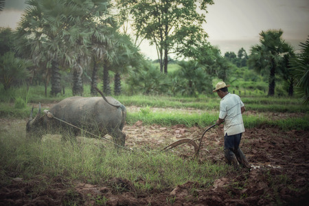 arando: Farmer plowing with water buffalo in Thailand Foto de archivo