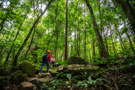 hikers walking in the woods with a rich and mature trees, Trekker.
