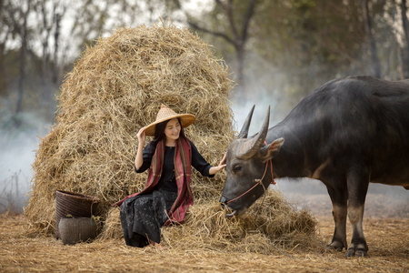 Asian woman farmer with a buffalo in the field of the countryside of Thailand, relationship