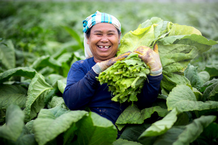 Asian old women in tobacco smiling happily at the camera. Stok Fotoğraf