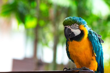 Macore bird, ma core bird Lovely and lovable pet parrot from the Amazon jungle.