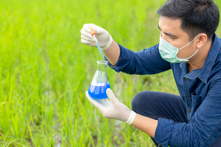 Asian man wearing a mask and gloves examines the water quality in his rice fields with glass tubes.