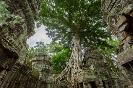 Ancient Khmer architecture, Ta Prohm temple ruins hidden in jungles. Popular travel destination at Siem Reap, Angkor Wat Cambodia. Stock Photo