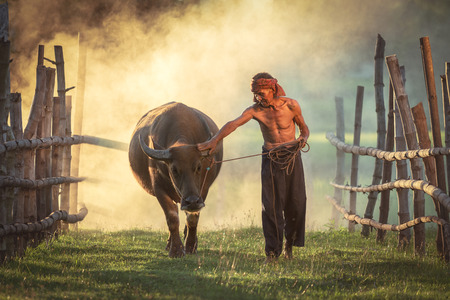 Amezing Love is love of peasants loyal to Buffalo, Thailand. Stock fotó - 107650058