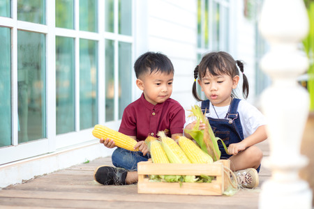 Little boy and little girl help to peel sweet corn, fun. Stock Photo