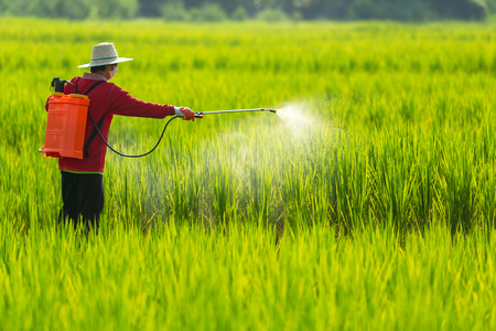 Asian farmer peasantry spraying pesticides in rice fields 免版税图像 - 110613200