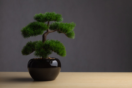 Bonsai on the desk. The backdrop is a dark gray background. The bonsai concept adorned the desk to reinforce the aura, japanese whitepine bonsai.