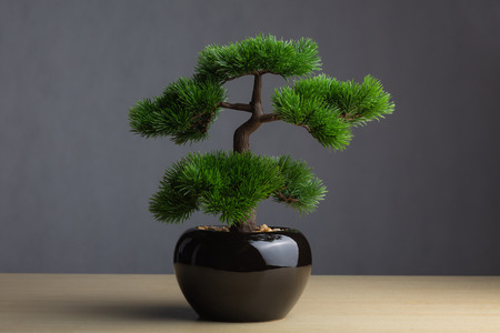 Bonsai on wooden table The sacred tree decorating for the prosperity. Stock Photo