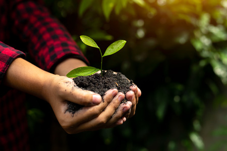 Mano che tiene la pianta con bokeh e sfondo naturale, salva il mondo e il concetto della Giornata mondiale dell'ambiente in una giornata di sole. Archivio Fotografico