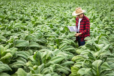 Bauernmann mit Laptop, der auf Feldtabak steht, Konzept der Untersuchung des Tabakwachstums.