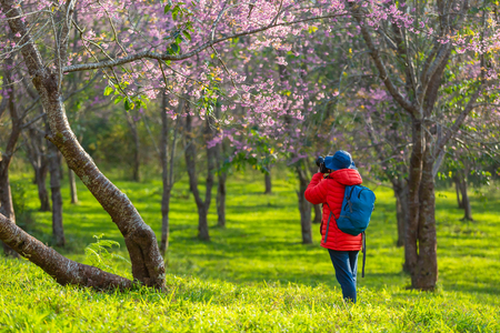Photography traveler Sightseeing in Japan take pictures Cherry blossom. Stock fotó