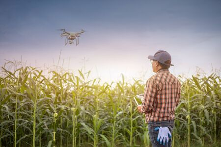 Drone in corn fields, Farmers use drone to explore the growth of corn fields, The concept of using technology for agriculture.