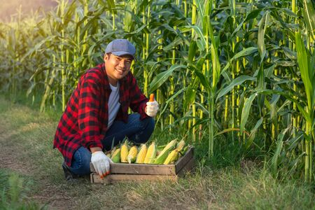 The farmer lifted his thumb to sweet corn to show his confidence in his corn. Banco de Imagens