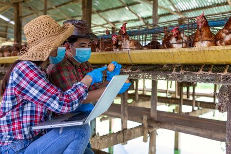 Two Asian farmers inspect and record the quality data of the chicken eggs using a laptop in eggs chicken farm. Фото со стока