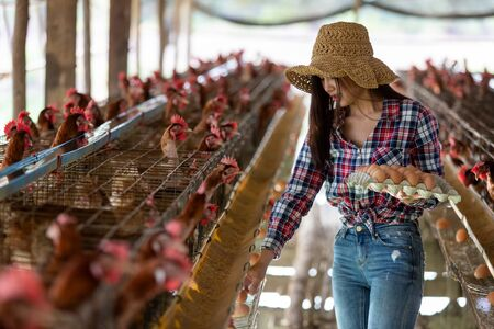 Portrait of young asian woman farmer collect fresh eggs in hands in Eggs chicken farm. Фото со стока