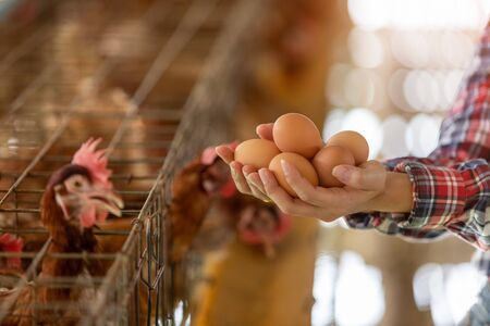 Close-up hand of young asian woman farmer holdding fresh eggs in hands in Eggs chicken farm.
