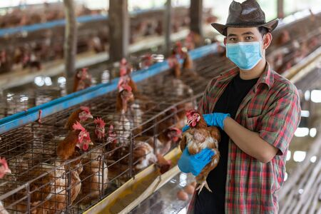 Portrait of young asian man farmer wear gloves and a mask in Eggs chicken farm.