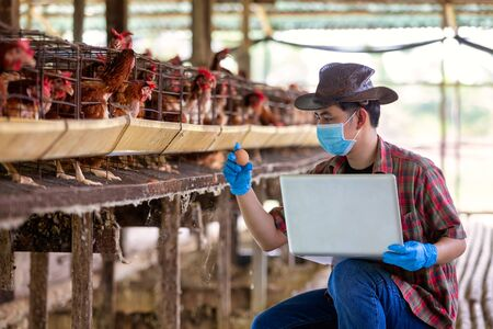 Asian farmers inspect and record the quality data of the chicken eggs using a laptop in eggs chicken farm. Фото со стока