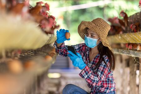Asian farmers inspect and record the quality data of the chicken eggs using a phone in eggs chicken farm.