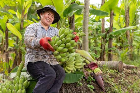 Asian woman farmer show green banana in farm. Agriculture concept.