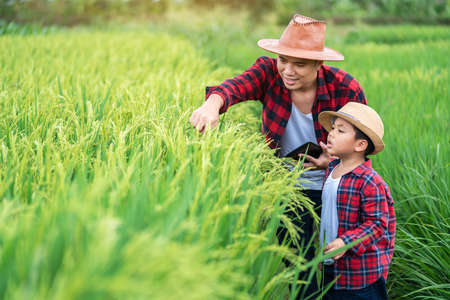 Asian farmer and son learning the surroundings in the green fields in the age of technology, education concept outside the classroom Educational freedom, Father teaching children