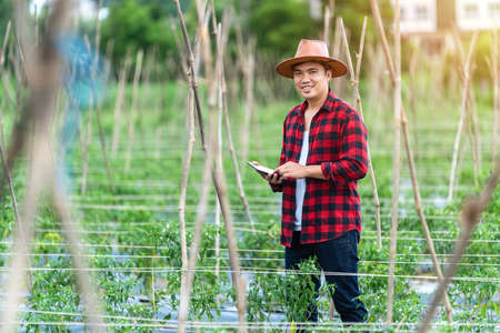 Asian young farmers is using the research tablet and studying the development of tomato varieties in the field. To increase the productivity. Agriculture technology concept. Foto de archivo